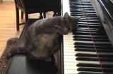 Настройка Пианино своими руками